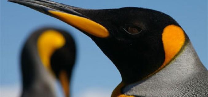 Llega un Pingüino al zoo de tarifas de Orange