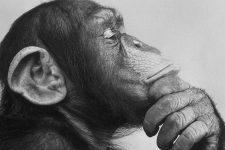El dilema de los operadores móviles virtuales: convergencia o extinción